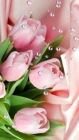 Pearl Tulips