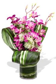 Myterious Orchids
