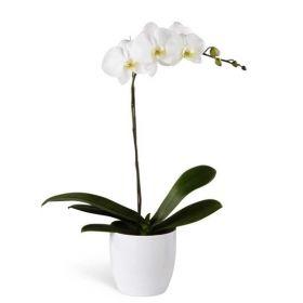 White Orchid Planter - 1 Stem
